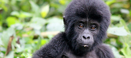 10-days-congo-safari