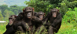 7-days-congo-safari