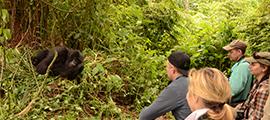 12-days-rwanda-uganda-safari