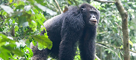 12-days-uganda-gorilla-safari