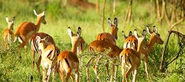 3-days-mburo-safaris