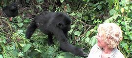 4-days-rwanda-gorilla-safaris