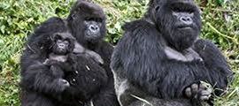 4-days-rwanda