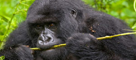 5-days-congo-safari