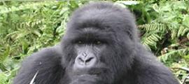 6-days-congo-safari