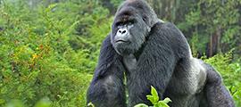 9-days-rwanda-safari