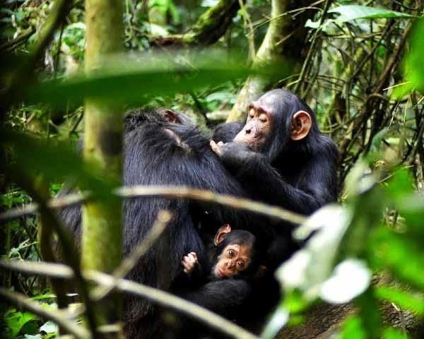 Kibale Forest National Park Uganda