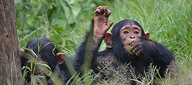 lwiro-chimpanzee-sanctuary