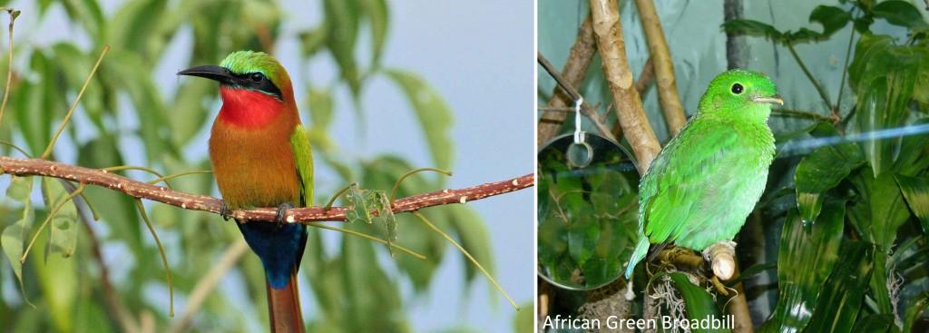 birds-in-bwindi-np