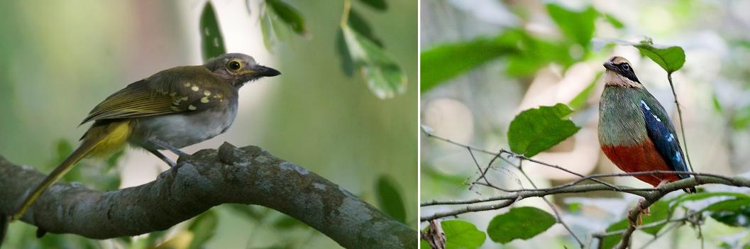 birds-kibale