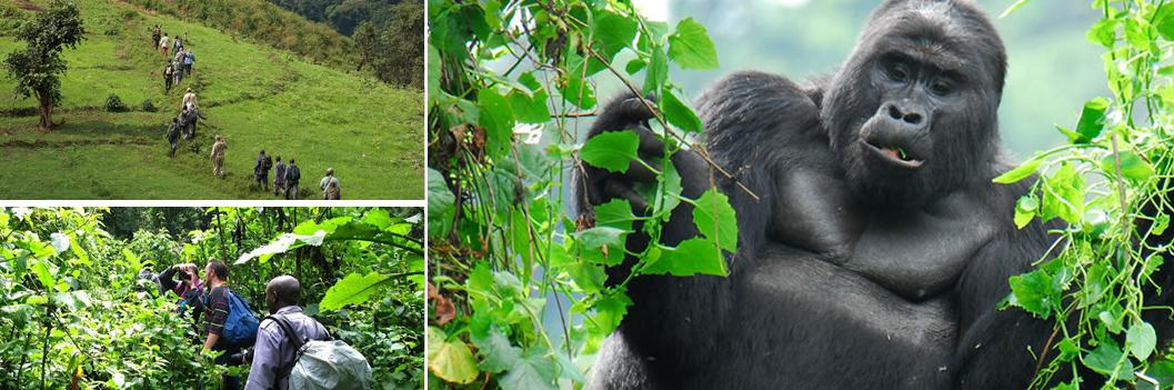 bwindi-gorilla-trekking