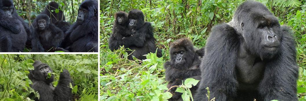 bwindi-mountain-gorillas