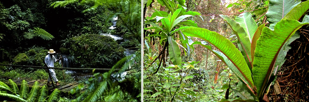 flora-nyungwe-forest-np