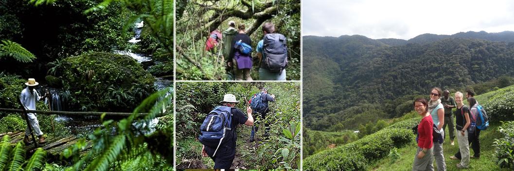 forest-walk-nyungwe