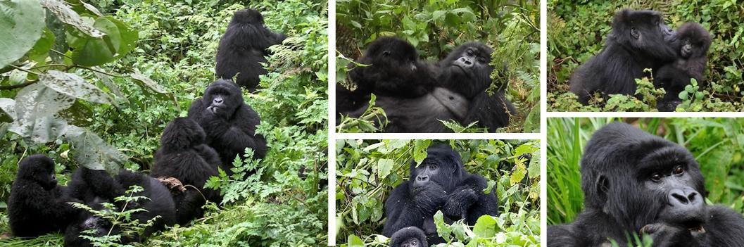 gorilla-safaris-rwanda