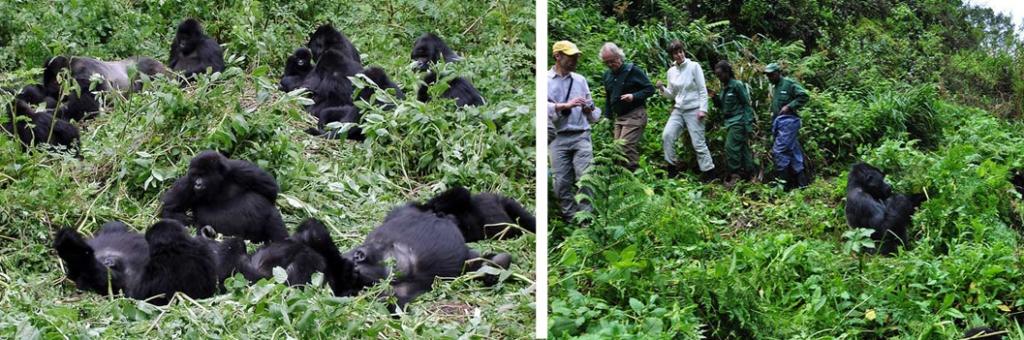 Tourists on a Congo gorilla safari