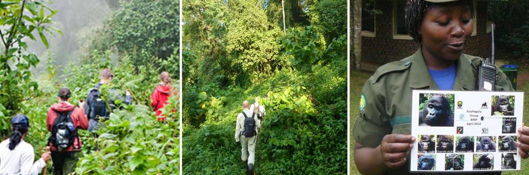 gorilla-trekking-in-bwindi-1