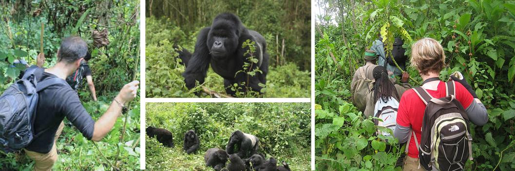 gorilla-trekking-in-virunga
