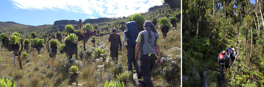 8 Days Mountain Rwenzori Climbing in Uganda