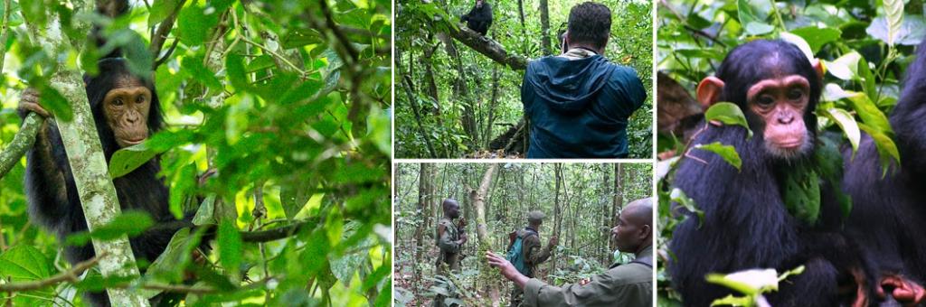 12 Days Uganda Rwanda Gorilla Trekking Safari