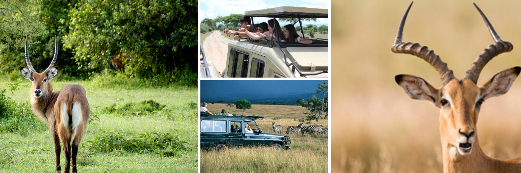 lake-mburo-game-drive
