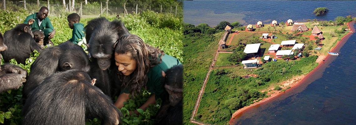 ngamba-highland-uganda-chimp-safari