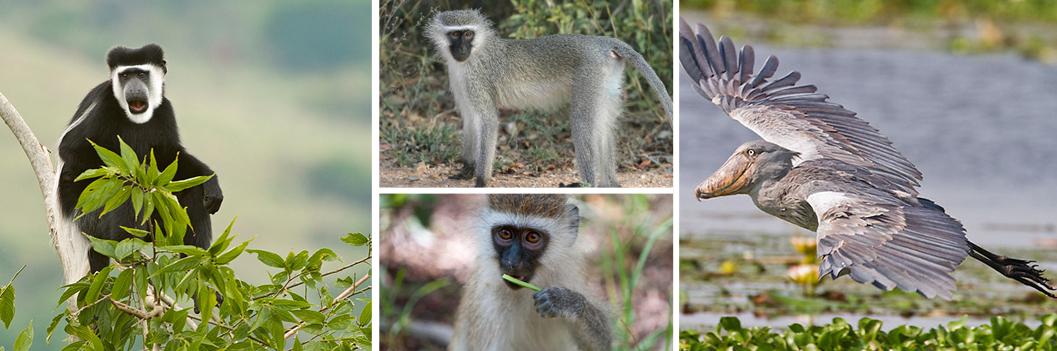 primates-queen-elizabeth-np