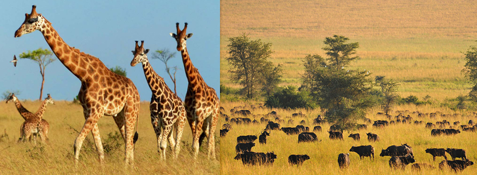 4 Days Uganda Wildlife Safari to Kidepo National Park
