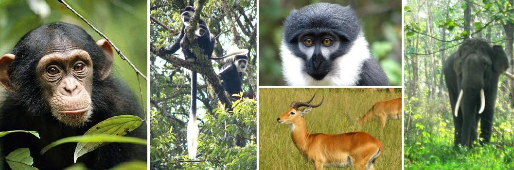 wildlife-at-bwindi