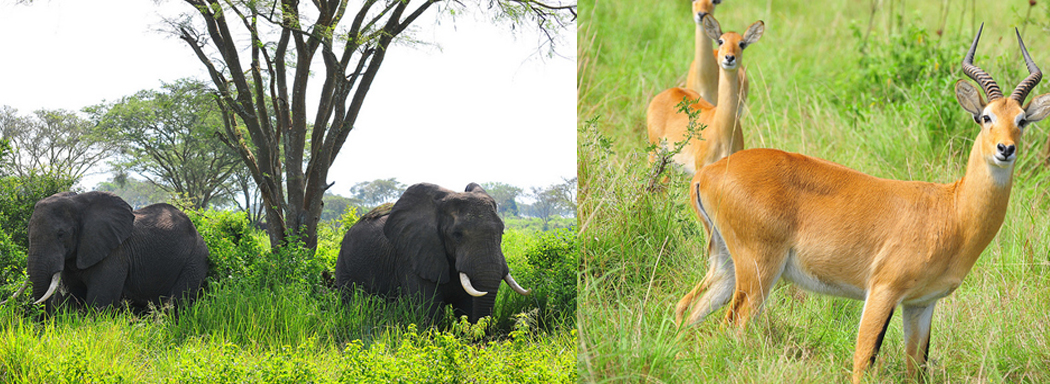 4 Days Queen Elizabeth Wildlife Safari Uganda