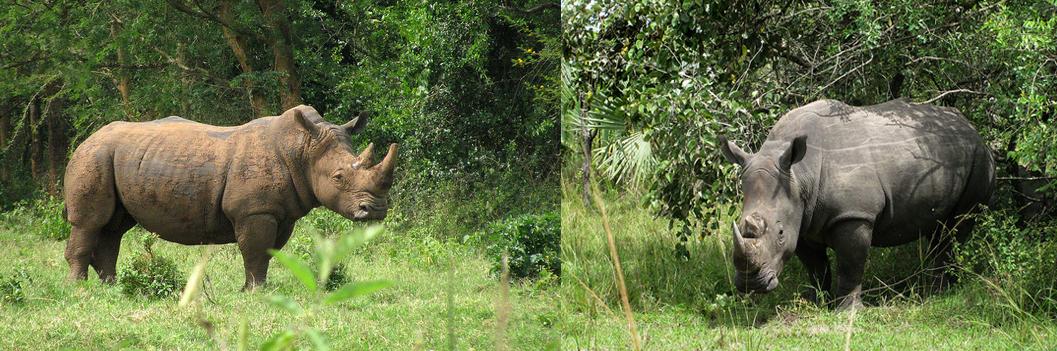 12 Days Uganda Wildlife Safari