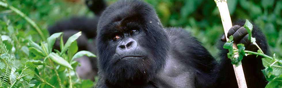 13 Days Uganda Gorilla Trekking Tour and Wildlife Safari
