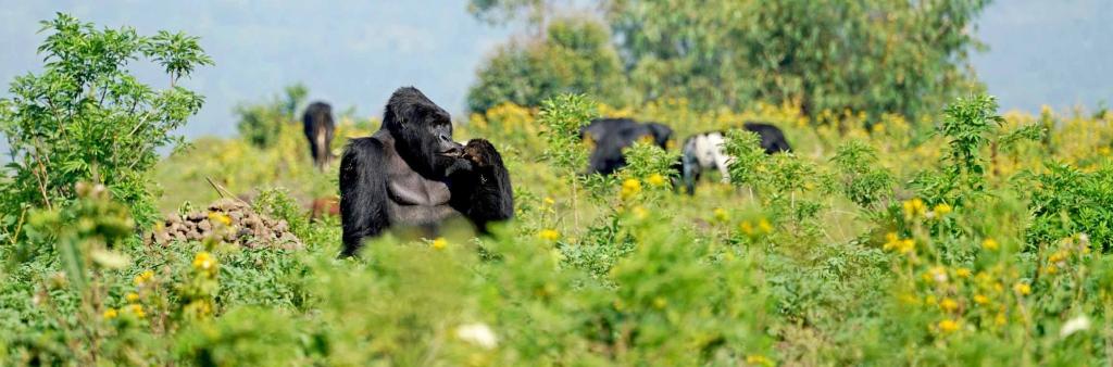 16 Days Uganda Gorilla Trekking Safaris