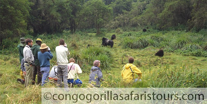 Tourists on a Rwanda gorilla trekking safari