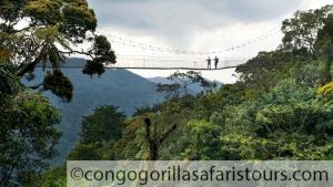 5 days kahuzi Biega lowland Congo gorilla trekking safari and Nyungwe canopy walk