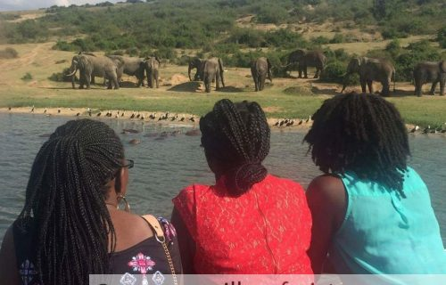 12 Days Apes, Wildlife Safari in Uganda