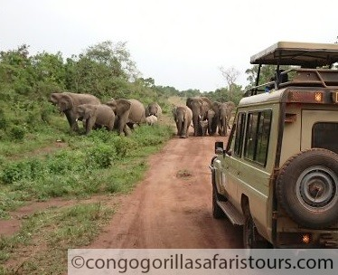 6 Days Uganda Wildlife Safari