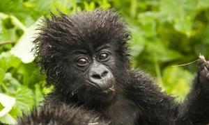 12 Days Rwanda Gorillas, Adventure and Cultural Safari