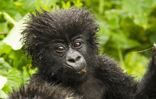 12 Days Rwanda Gorillas, Adventure and Cultural Safari
