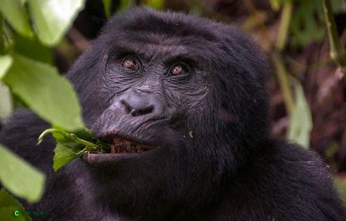 16 Days Uganda Gorilla Trekking and Adventure Tour