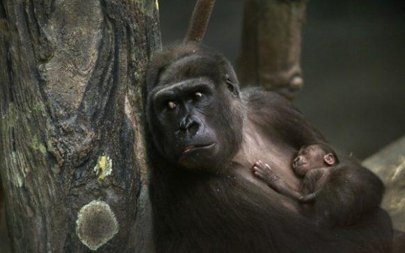 Kahuzi Biega National Park Congo