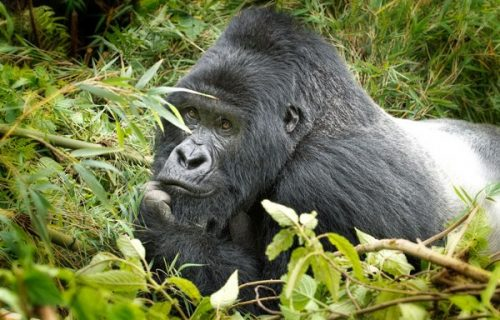 4 Days Rwanda Gorilla & Adventure Safari