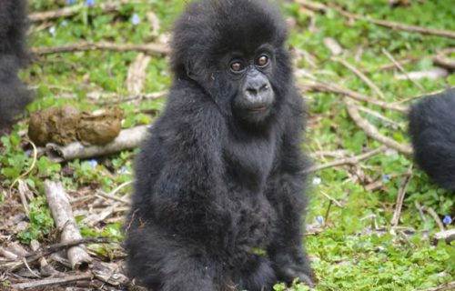 6 Days Rwanda Gorilla Trekking and Cultural Safari