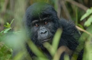 8 Days Rwanda Gorilla Tour & Cultural Safari