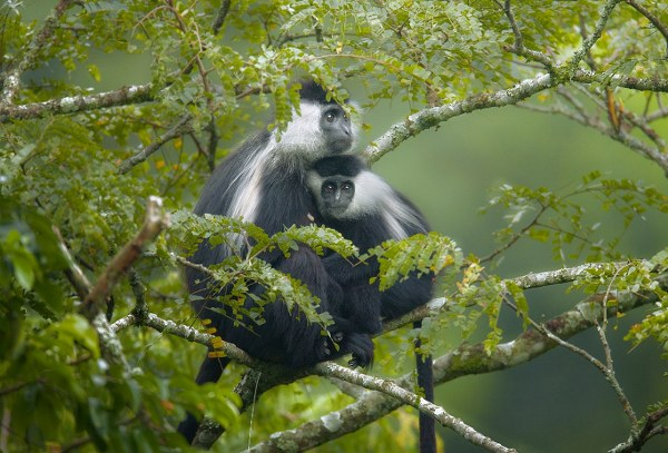 9 Days Uganda Gorilla Trekking & Wild Game Viewing Safari