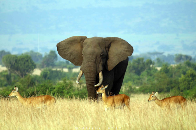 Uganda National Game Parks