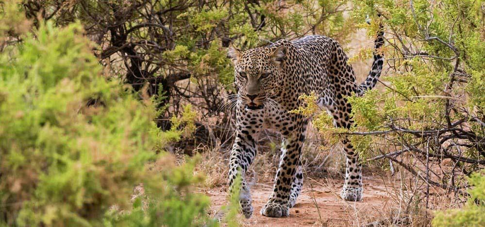 Semuliki National Park Uganda